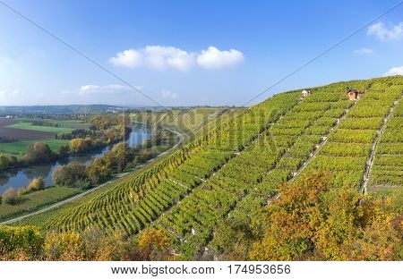 Vineyards in autumn at the river Neckar, in the background the village Besigheim, Germany