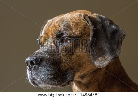 Cute Cheeky Dog Looking Left Of Camera