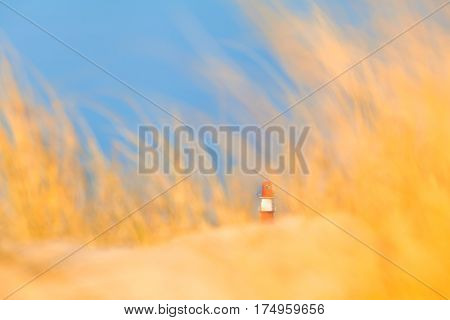 Small red and white striped lighthouse at the distance surrounded by blurred yellow sand and dune grass, blue sky (copy space)