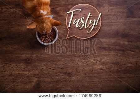 Chihuahua dog eat feed. Bowl of dry kibble food. Tasty speech bubble. Healthy pets meal. Blue plate on wooden rustic background.