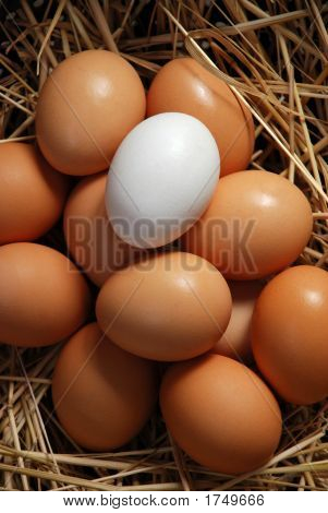 Whte Egg And  Brown Eggs 31
