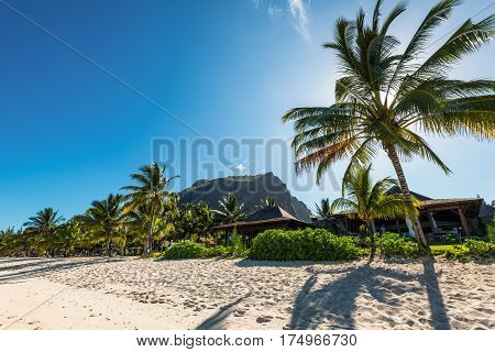 Le Morne Mauritius - December 11 2015: Amazing white beaches of Mauritius island. Tropical vacation in Le Morne Beach Mauritius. Le Morne Brabant mountain in the background. Palma backlit foreground.