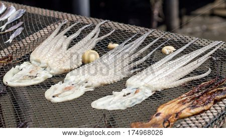 Drying Squid On Net