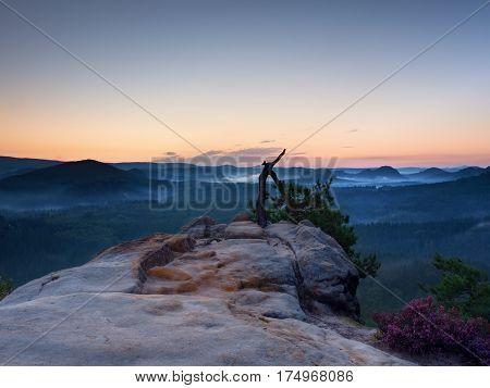Wild Bonsai Pine Tree On Sandstone Rocky Cliff. Tourist Resort.