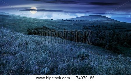 high mountain idyllic landscape. grassy meadow with forest on hillside. beautiful nature at night in full moon light
