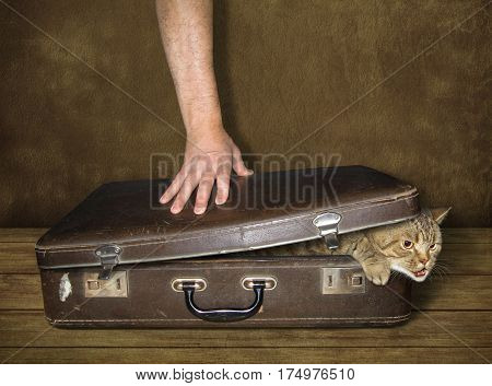 The cat is trying to get out of a old suitcase. The man prevents him free.