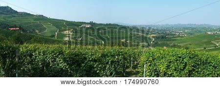 Barolo, Italy - 3 july 2011: The vineyards at the village of Barolo in Piedmont, Italy