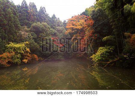 Autumn Leaves Near Pond, Kyoto