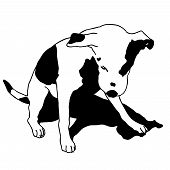 Vector black and white sitting dog. Smart and darling doggy. Man's best friend. Outlined cute dog. Crafty and sly doggie. Flatten isolated master illustration. poster