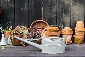romantic idyllic plant table in the garden with old retro flower pot pots garden tools and plants. Rustic table with flower pots potting soil trowel and plants poster