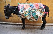 donkey in fes with a colorful saddle-rug, Morocco poster