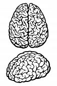 Top and side view of human brain. Vector Illustration poster