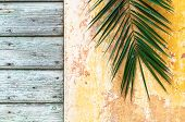 Palm branch on an old rough vintage wall and wooden door of historical house as Palm sunday and Jerusalem background and retro tropical concept lent poster