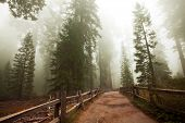Sequoia National Park in USA poster
