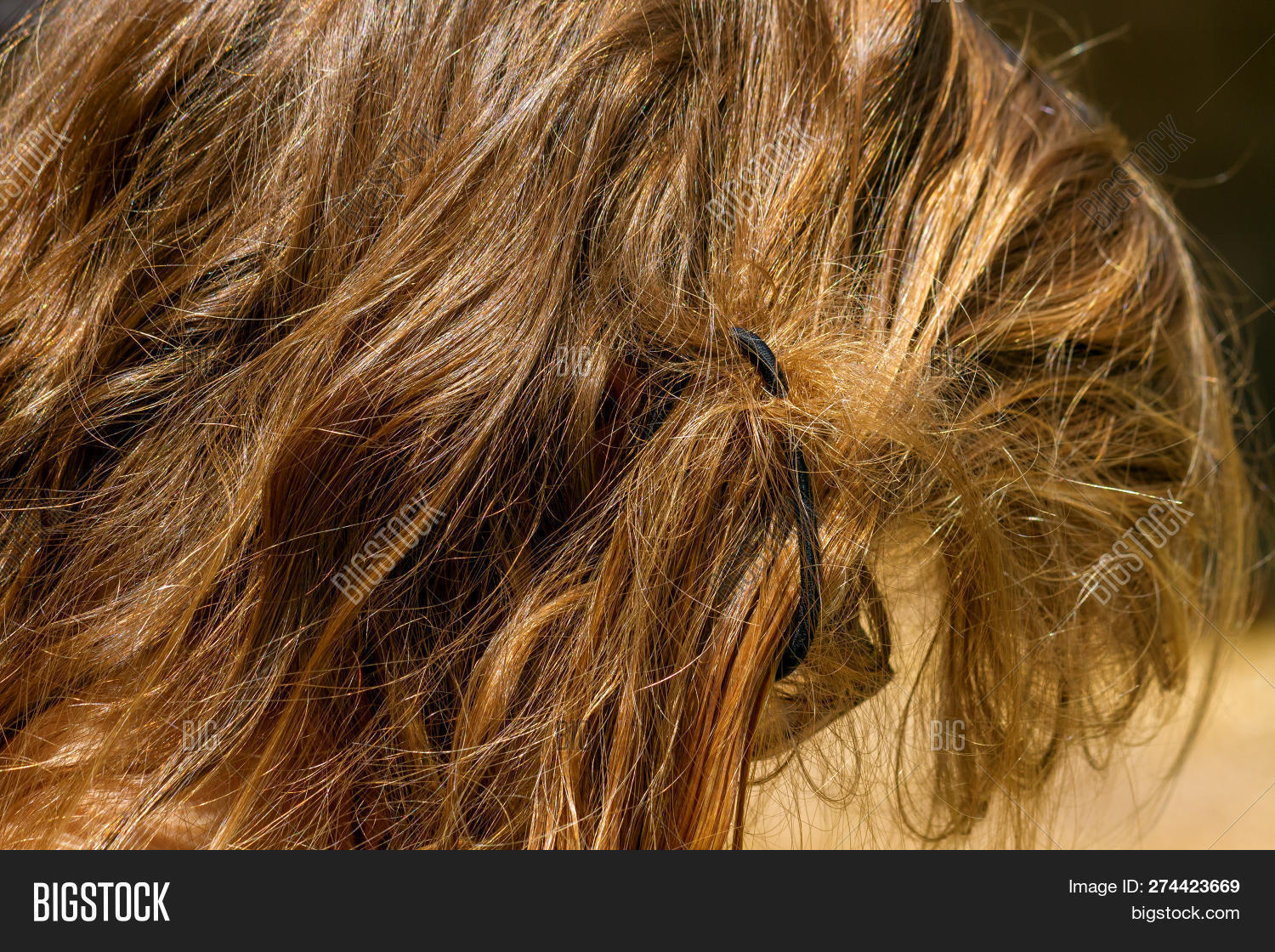 Matted Hair Blond Girl Image & Photo (Free Trial) | Bigstock