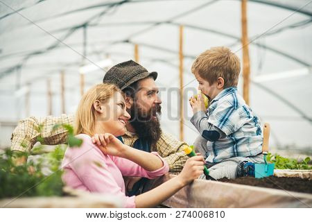 Happy Family. Happy Family In Greenhouse. Happy Family Day. Happy Family With Little Son In Orangery