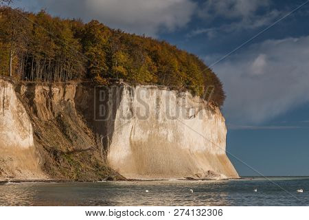 Chalk Cliffs On The Island Of Rügen In The Jasmund National Park With The Old Beech Forest. Erosion