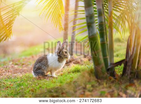 Rabbit On Nature / Cute Little White And Brown Rabbit On Garden Spring Grass Green Background