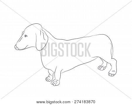 Dachshunds Images Illustrations Vectors Free