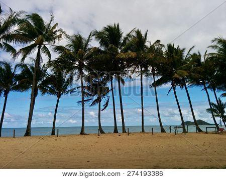 Palm Trees Lining A Far North Queensland Beach In Australia