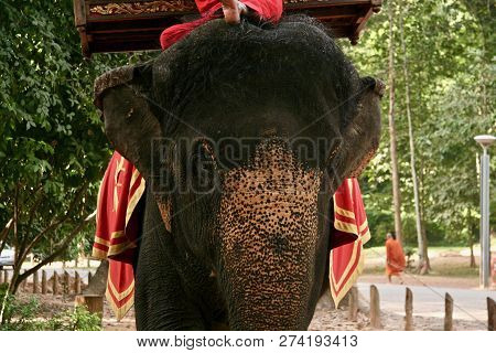 An Asian Elephant With Her Owner (mahout) Dressed With Red And Gold In Cambodia