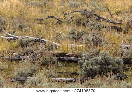 Dead Trees Lying In Autumn Grasses On Wyoming Hillside