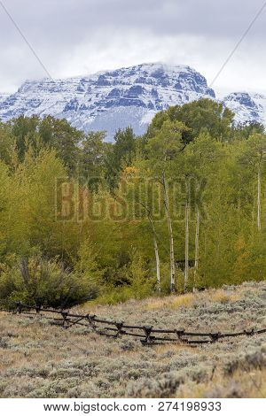 Early Autumn In Wyoming, Snow On Mountains, Wood Fence Through Sagebrush