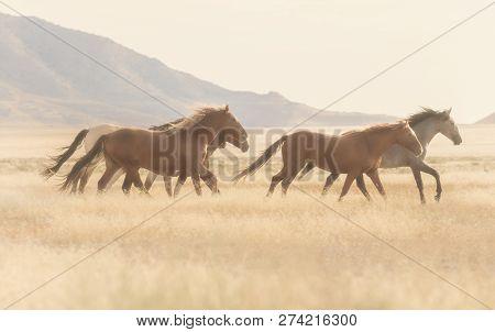 A Herd Of Wild Horses Kick Up Dust Running In The Utah Desert