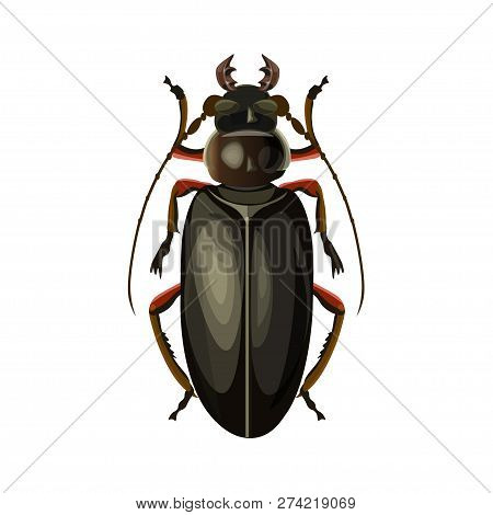 Titan Beetle. Vector Illustration Isolated On White Background