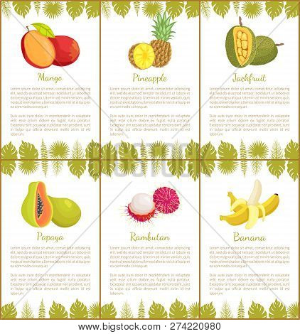 Mango And Pineapple Posters Set With Text Sample And Leaves Of Plants. Jackfruit And Papaya, Rambuta
