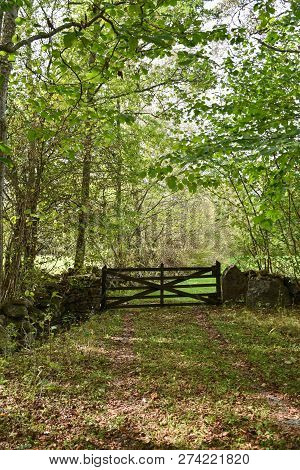 Deciduous Forest With An Old Wooden Gate At The Swedish Island Oland