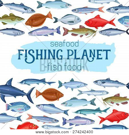 Fish, Vector Illustration. Seafood , Cartoon Salmon, Anchovy, Codfish, Sea Bass, Ocean Perch And Sar