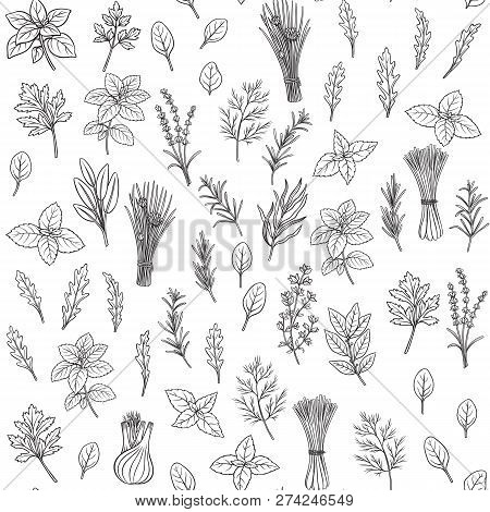 Culinary Herbs And Spice Seamless Pattern. Engraved Seasoning. Vector Illustration. Bay Leaf, Lemong