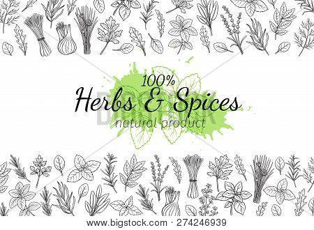 Culinary Herbs And Spice Layout Page. Bay Leaf, Lemongrass, Fennel, Dill, Cilantro And Chives. Thyme
