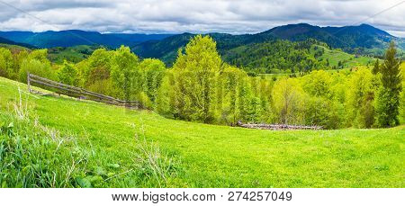 Panorama Of Agricultural Area In Mountains. Trees On Hills In Fresh Green Foliage In Spring
