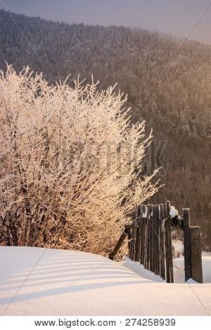Countryside Glowing Frost Of Winter Sunrise. Trees In Hoarfrost Near The Wooden Fence On A Snowy Mea