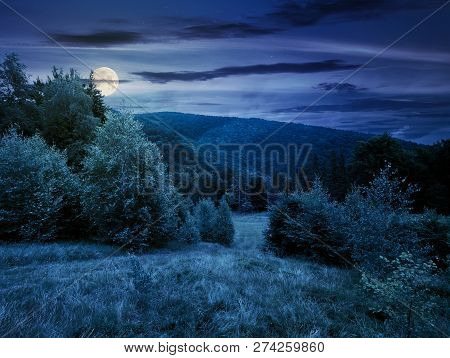 Forested Area In Mountains At Night In Full Moon Light. Calm Nature With Green Grassy Meadow And Clo
