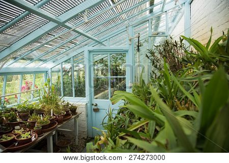 Blue Painted Glass Walled Greenhouse With Lots Of Plants And Flowers, Indoor.