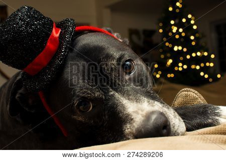Christmas Dog Holiday Image Photo Free Trial Bigstock