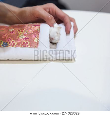 Selective Focused Owner tending Winter White Hamster in deathbed on white background. Pet animal death, Illness, Life moment, Truth moment, Farewell, Tears, Sadness, Sympathy, Rest in Peace, Parting and Goodbye concept poster