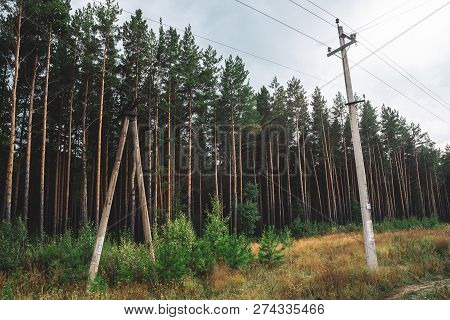 Power Lines In Glade Along Conifer Trees In Sunlight. Poles With Wires Among Tall Pines. Electricity