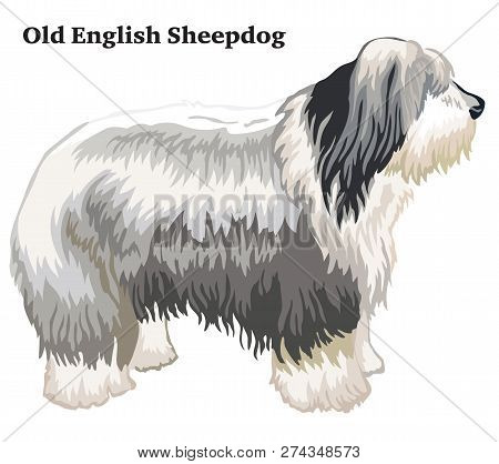 Portrait Of Standing In Profile Dog Old English Sheepdog, Vector Colorful Illustration Isolated On W