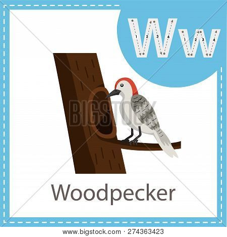 Illustrator Of Woodpecker For Kid And Education
