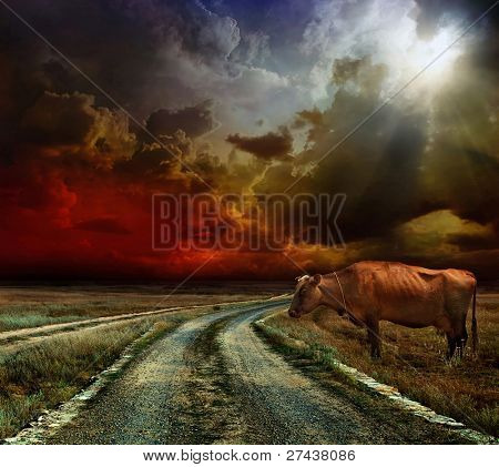 A cow on the field. before the Storm