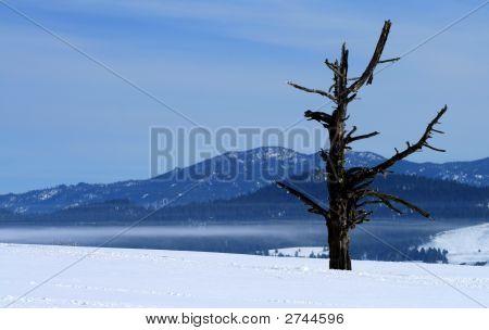 Mortons árbol