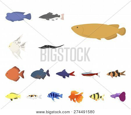 Different Types Fish Vector Photo Free Trial Bigstock