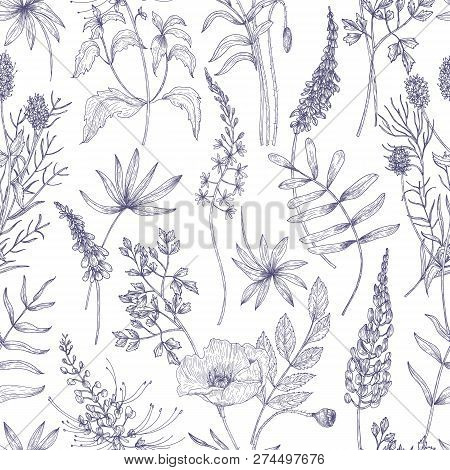 Natural Seamless Pattern With Wild Blooming Flowers And Flowering Herbs Drawn With Contour Lines On