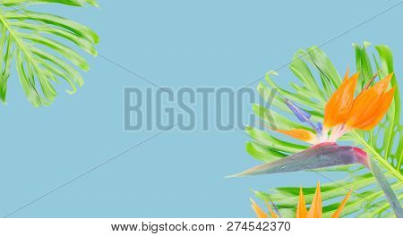 tropical flowers and leaves - resh strelizia bird of paradize flowers and exotic monstera leaves on blue background with copy space poster