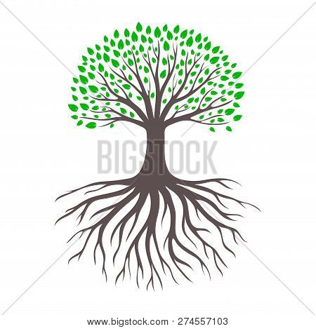 Tree Branch And Root. Forest And Garden Landscape.