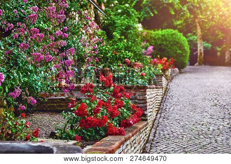 Landscape design with red roses in garden. Picturesque park walkway of paving stones and decorative plants green bushes trees.